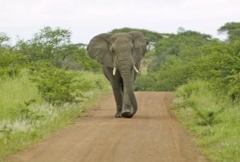KwaZulu-Natal Bush Safari